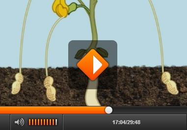 Allergie Planten Huid : Pinda stichting voedselallergie